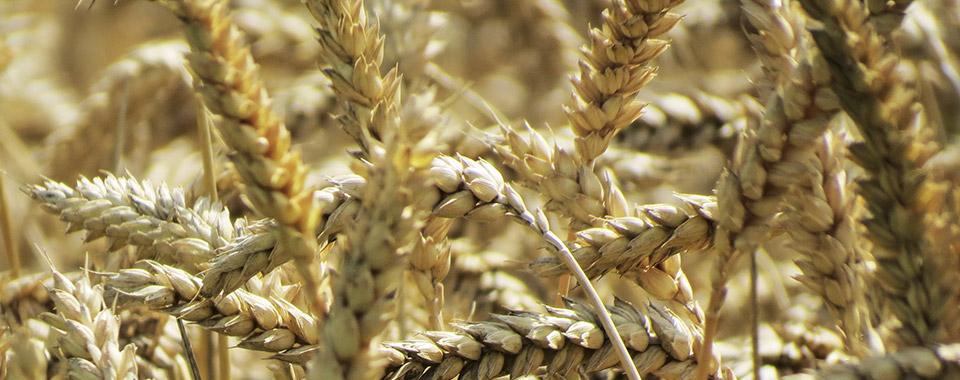 Decouvrez nos produits bio